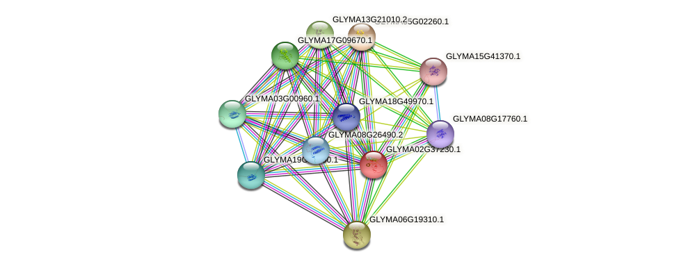 GLYMA02G37230.1 protein (Glycine max) - STRING interaction network