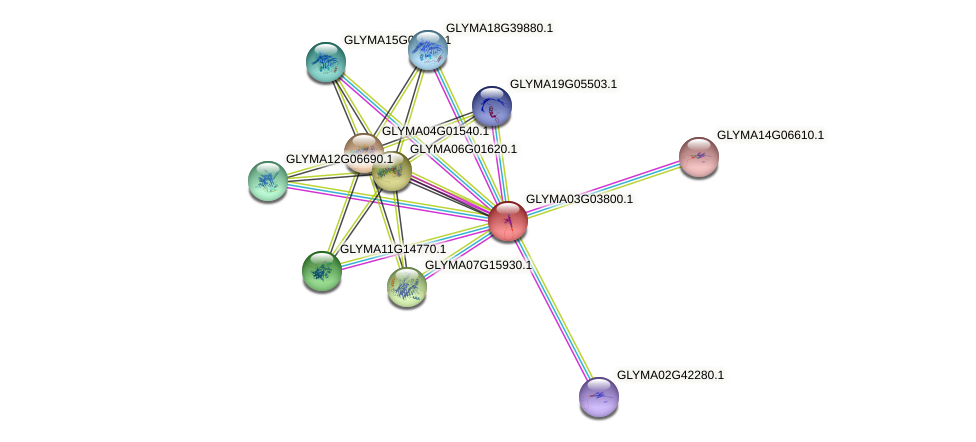 GLYMA03G03800.1 protein (Glycine max) - STRING interaction network