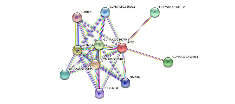 MYB51 protein (Glycine max) - STRING interaction network