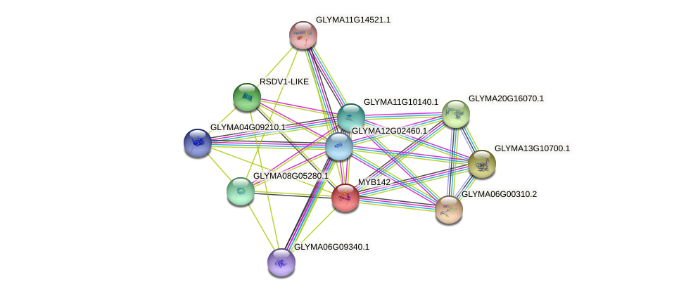 MYB142 protein (Glycine max) - STRING interaction network