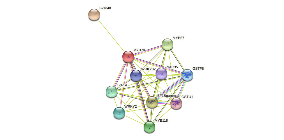 MYB78 protein (Glycine max) - STRING interaction network