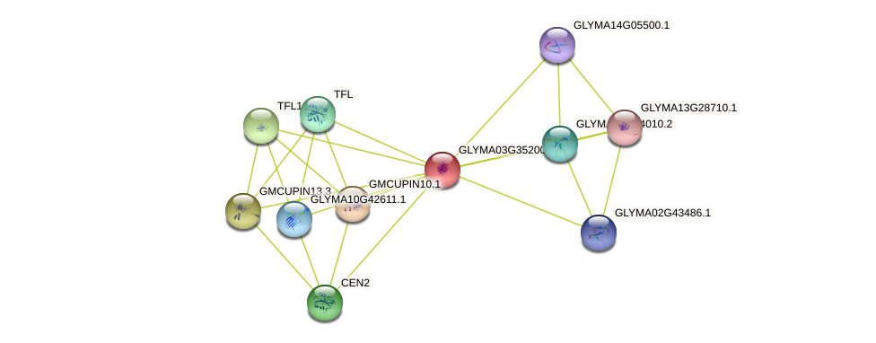 GLYMA03G35200.2 protein (Glycine max) - STRING interaction network