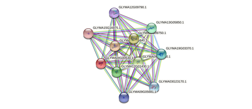 GLYMA04G00530.1 protein (Glycine max) - STRING interaction network