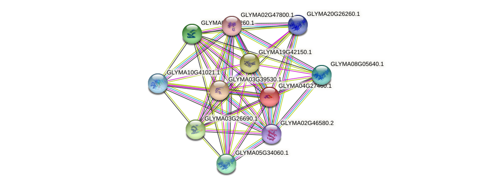 GLYMA04G27460.1 protein (Glycine max) - STRING interaction network