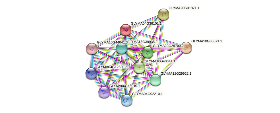 GLYMA04G36101.1 protein (Glycine max) - STRING interaction network