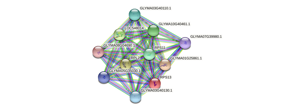 RPS13 protein (Glycine max) - STRING interaction network