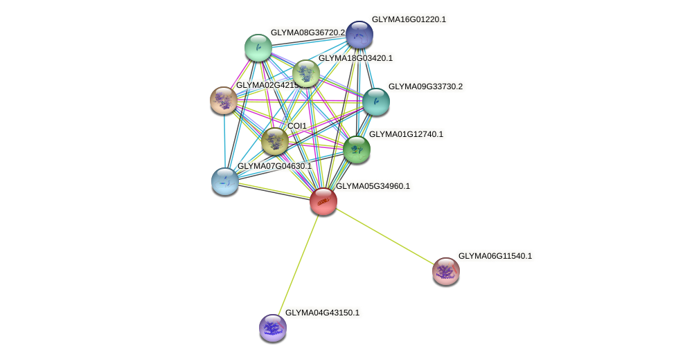 GLYMA05G34960.1 protein (Glycine max) - STRING interaction network