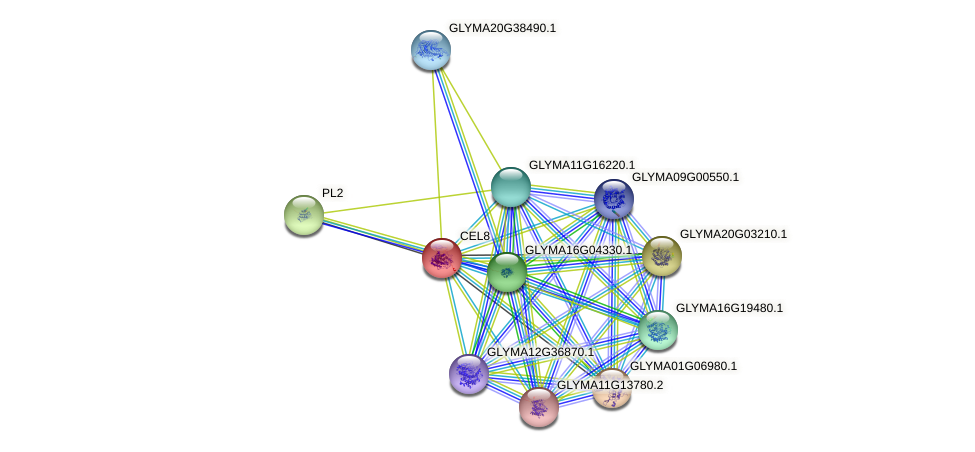 CEL8 protein (Glycine max) - STRING interaction network