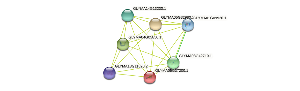 GLYMA05G37200.1 protein (Glycine max) - STRING interaction network