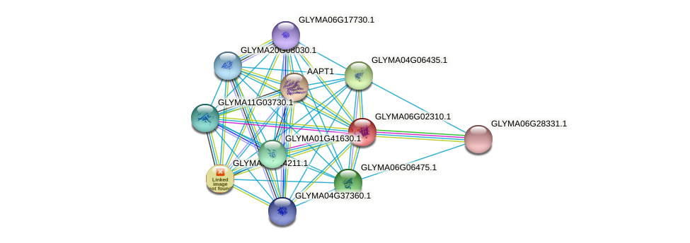 GLYMA06G02310.1 protein (Glycine max) - STRING interaction network