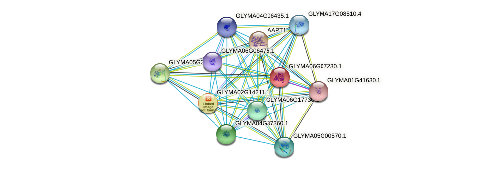 GLYMA06G07230.1 protein (Glycine max) - STRING interaction network