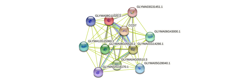 CCD8 protein (Glycine max) - STRING interaction network