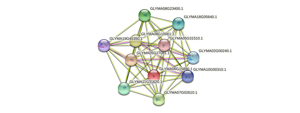 GLYMA06G15890.1 protein (Glycine max) - STRING interaction network