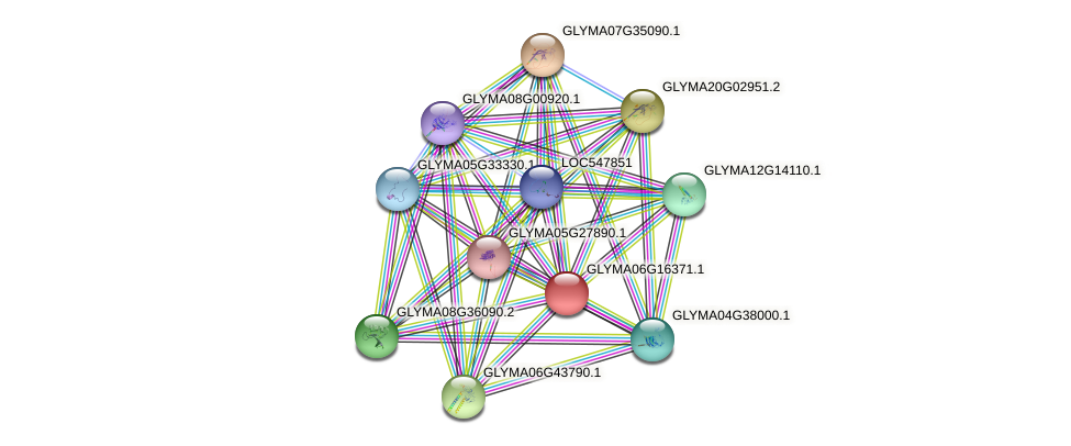 GLYMA06G16371.1 protein (Glycine max) - STRING interaction network