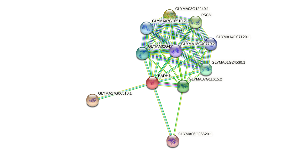 BADH1 protein (Glycine max) - STRING interaction network