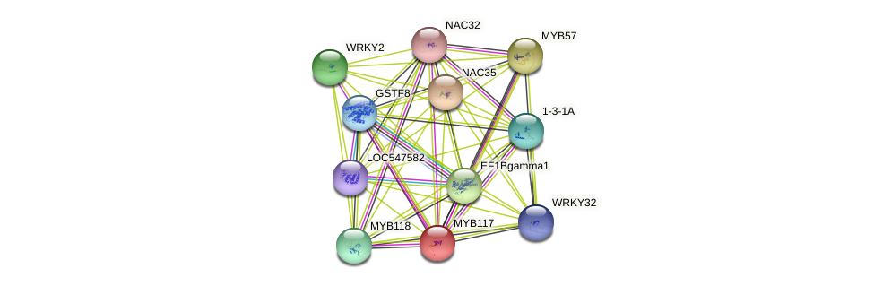 MYB117 protein (Glycine max) - STRING interaction network