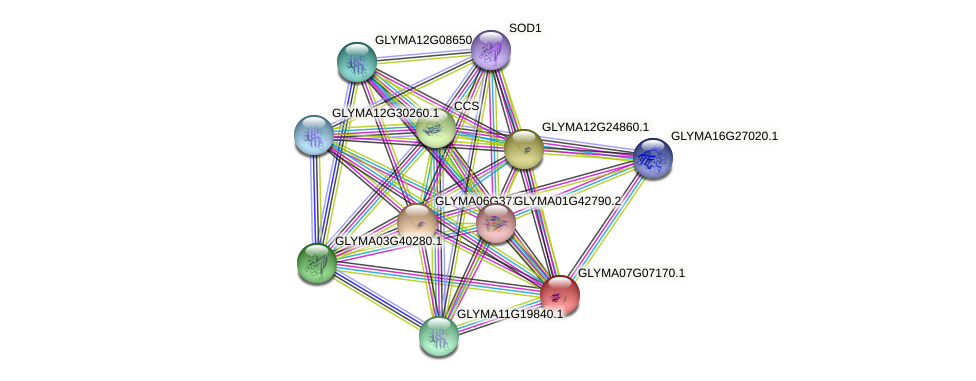 GLYMA07G07170.1 protein (Glycine max) - STRING interaction network