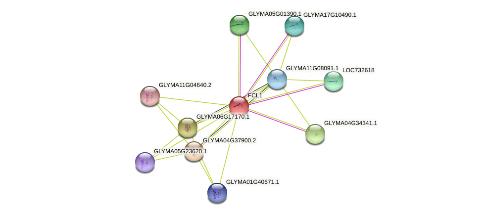 FCL1 protein (Glycine max) - STRING interaction network