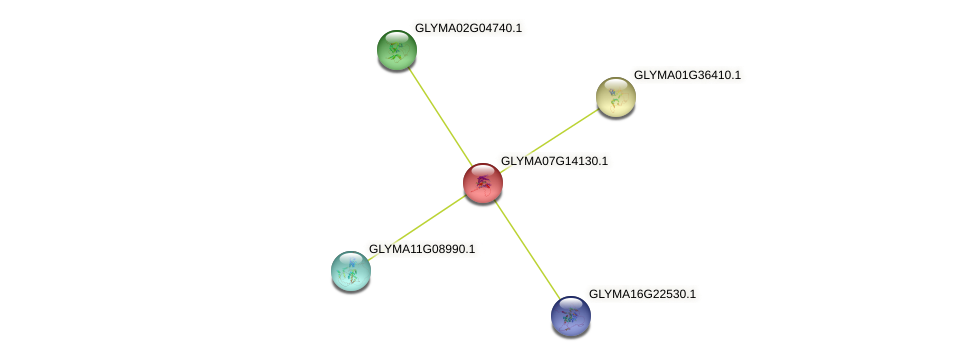GLYMA07G14130.1 protein (Glycine max) - STRING interaction network