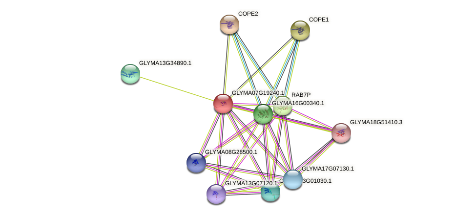 GLYMA07G19240.1 protein (Glycine max) - STRING interaction network
