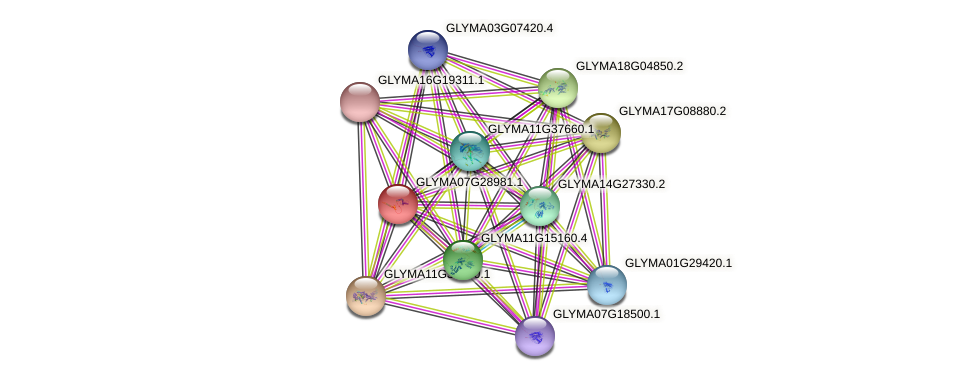 GLYMA07G28981.1 protein (Glycine max) - STRING interaction network