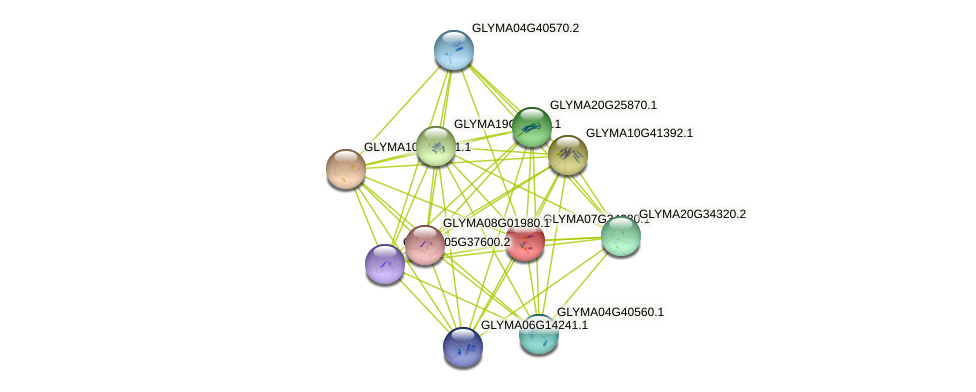 GLYMA07G34280.1 protein (Glycine max) - STRING interaction network