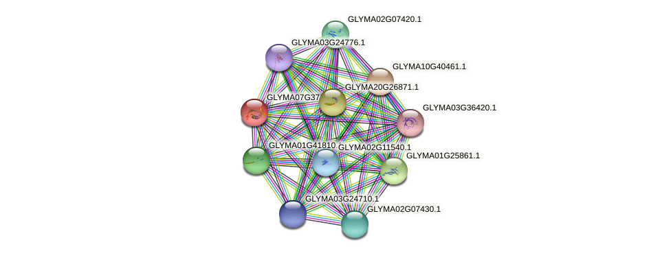 GLYMA07G37700.2 protein (Glycine max) - STRING interaction network