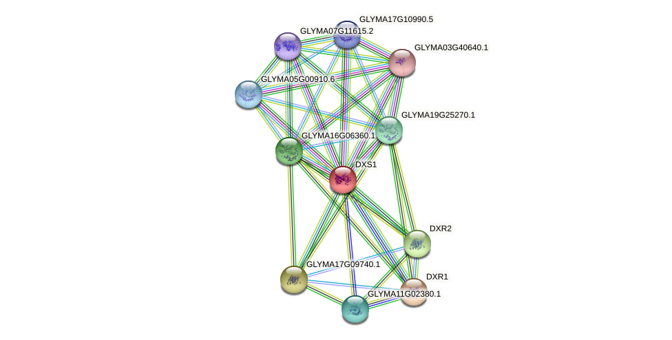 DXS1 protein (Glycine max) - STRING interaction network