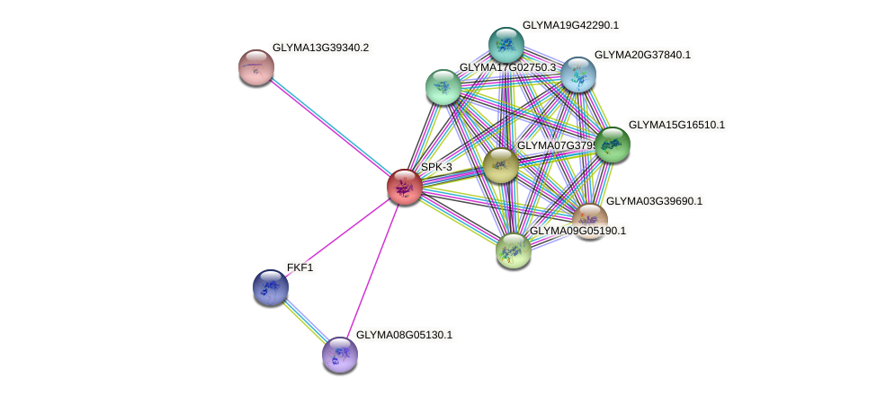 SPK-3 protein (Glycine max) - STRING interaction network