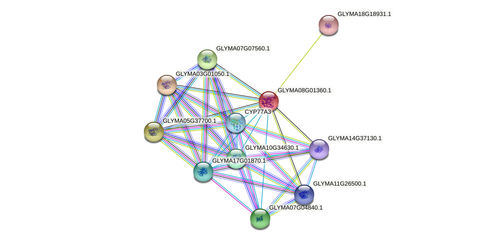 GLYMA08G01360.1 protein (Glycine max) - STRING interaction network