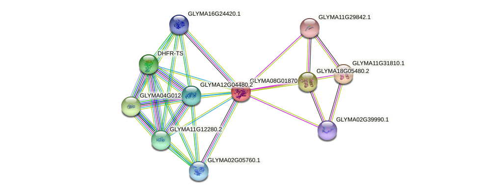 GLYMA08G01870.1 protein (Glycine max) - STRING interaction network