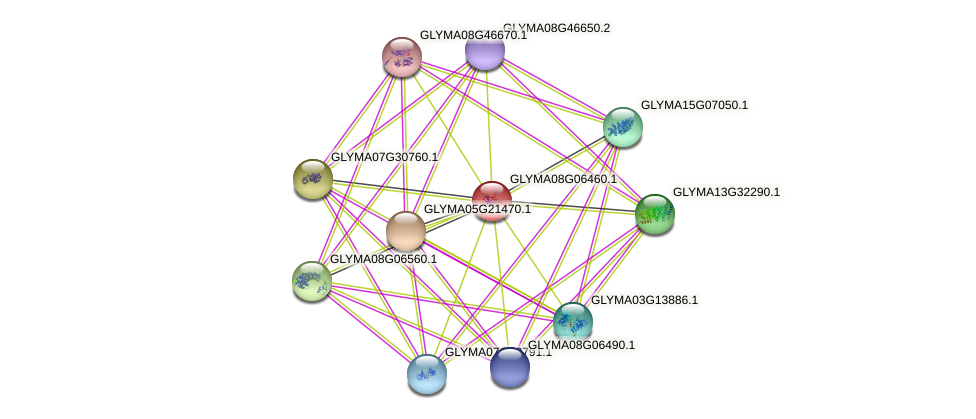 GLYMA08G06460.1 protein (Glycine max) - STRING interaction network