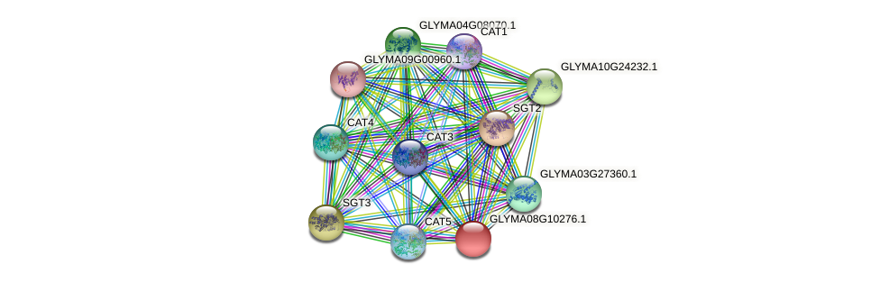 GLYMA08G10276.1 protein (Glycine max) - STRING interaction network