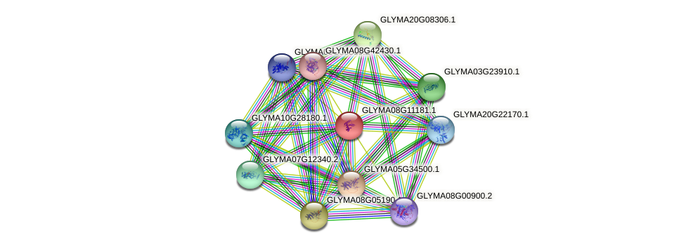 GLYMA08G11181.1 protein (Glycine max) - STRING interaction network