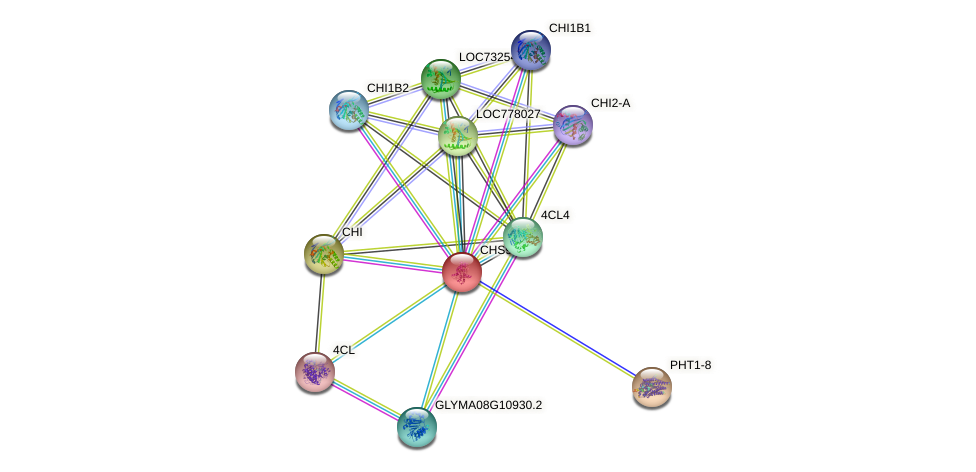 CHS9 protein (Glycine max) - STRING interaction network