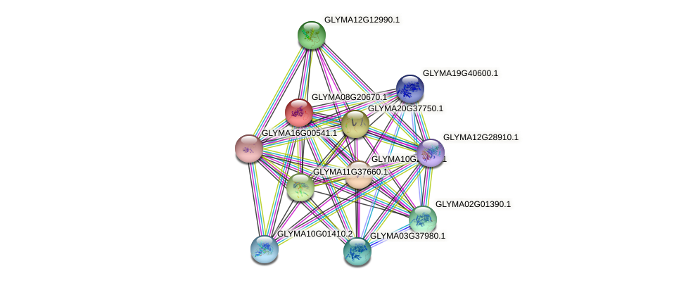 GLYMA08G20670.1 protein (Glycine max) - STRING interaction network