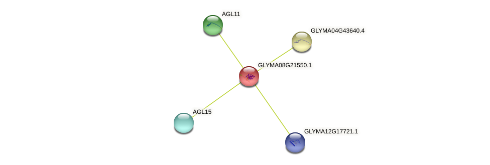 GLYMA08G21550.1 protein (Glycine max) - STRING interaction network