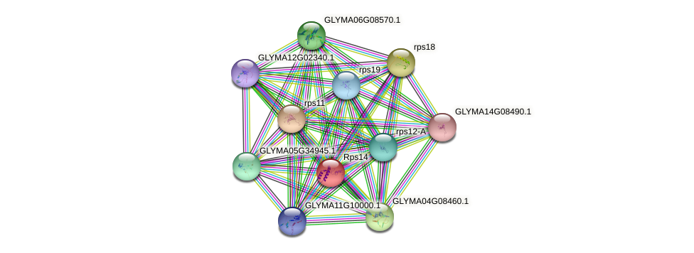 rps14 protein (Glycine max) - STRING interaction network