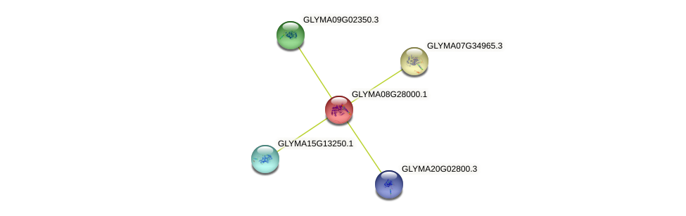 GLYMA08G28000.1 protein (Glycine max) - STRING interaction network