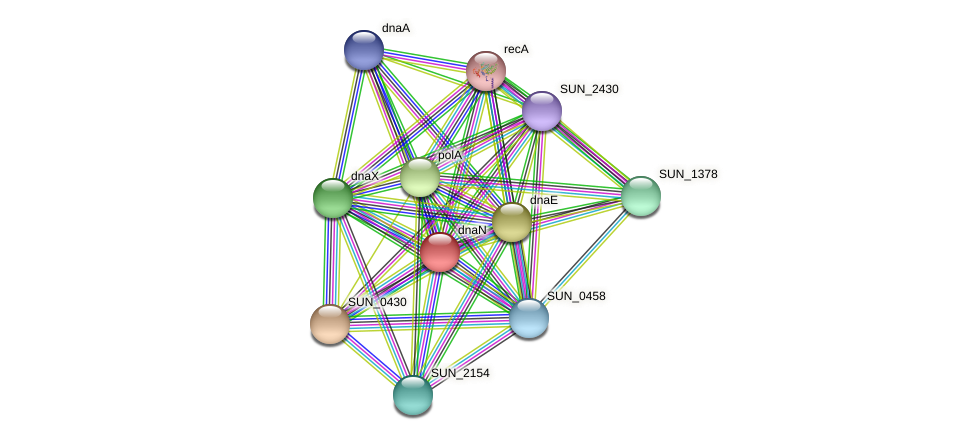 dnaN protein (Sulfurovum sp. NBC371) - STRING interaction network