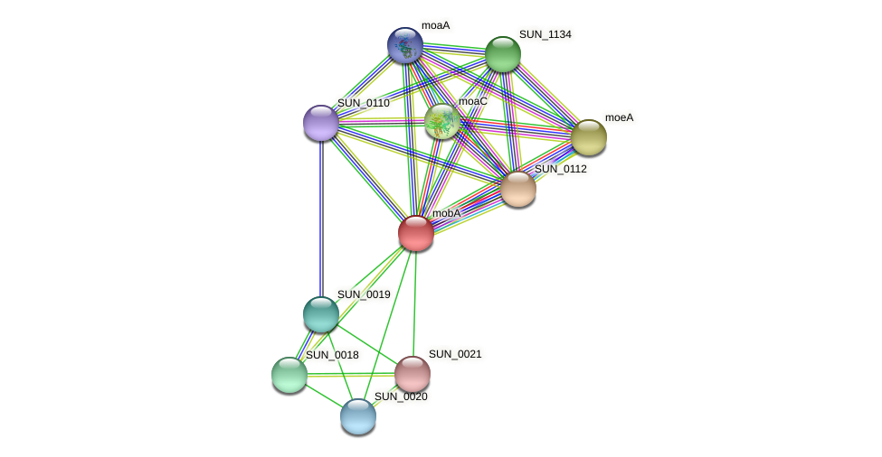 mobA protein (Sulfurovum sp. NBC371) - STRING interaction network