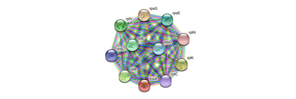 fusA protein (Sulfurovum sp. NBC371) - STRING interaction network