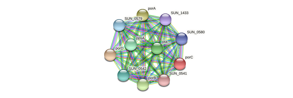 porC protein (Sulfurovum sp. NBC371) - STRING interaction network