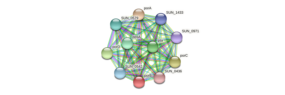 porB protein (Sulfurovum sp. NBC371) - STRING interaction network