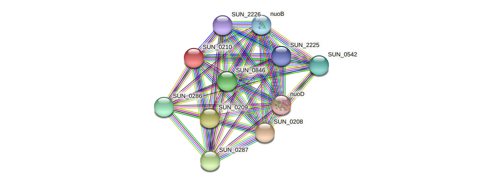 SUN_0210 protein (Sulfurovum sp. NBC371) - STRING interaction network