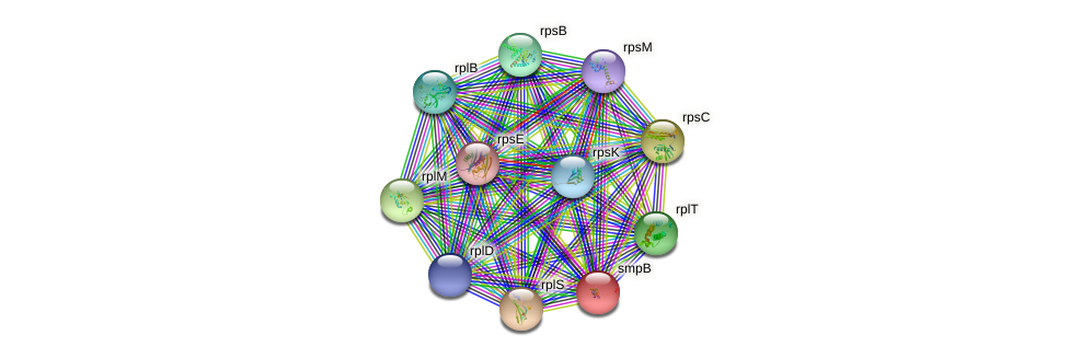 smpB protein (Sulfurovum sp. NBC371) - STRING interaction network