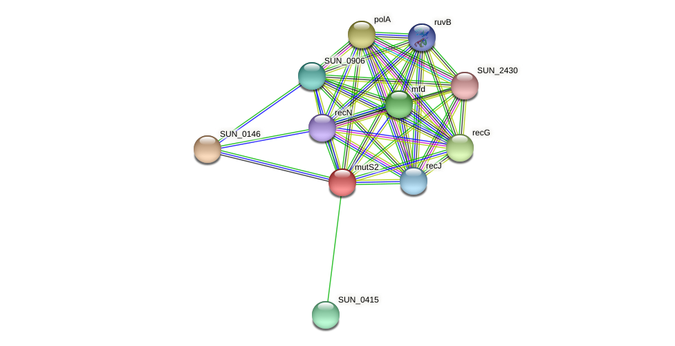 mutS2 protein (Sulfurovum sp. NBC371) - STRING interaction network