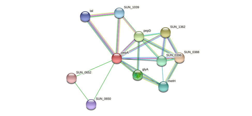 pepA protein (Sulfurovum sp. NBC371) - STRING interaction network