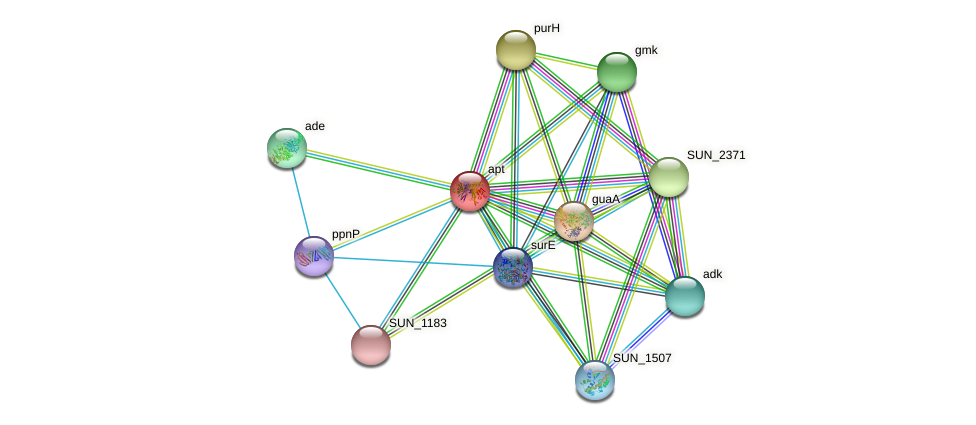 apt protein (Sulfurovum sp. NBC371) - STRING interaction network