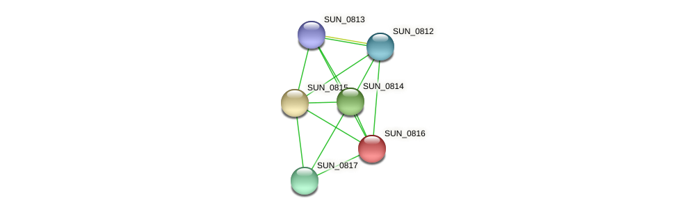 SUN_0816 protein (Sulfurovum sp. NBC371) - STRING interaction network